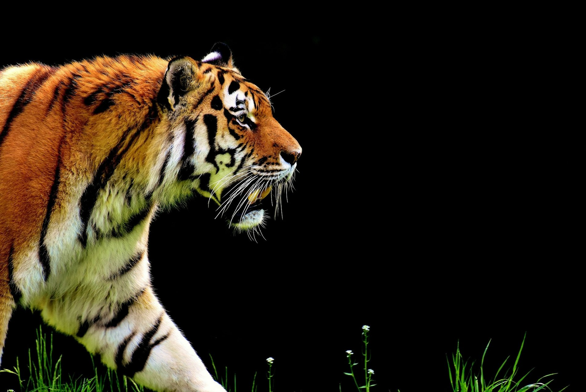 SCMP – Chasing tigers in the Sundarbans